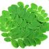 Manfaat dan Kandungan Senyawa Aktif Tanaman Kelor (Moringa oleifera)