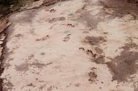 Icnitas del Arcosaurio.