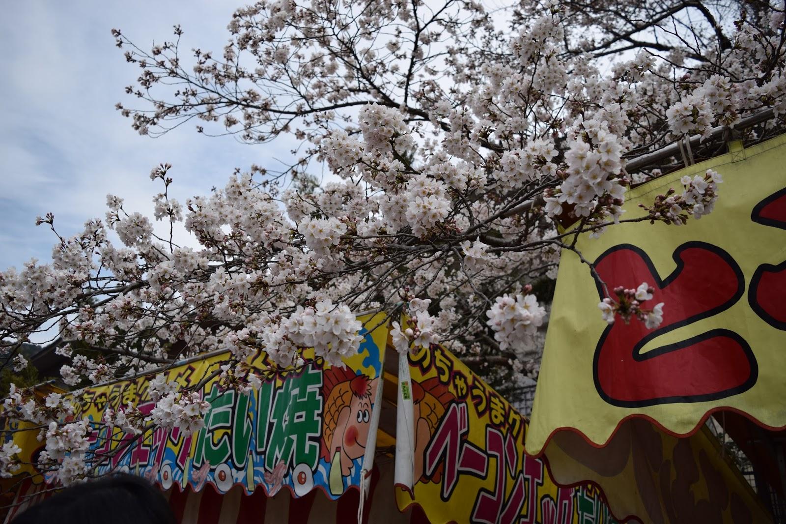 Maruyama Koen Sakura