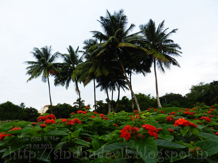 Clicked this view of coconut trees and lantana plants at Oxygen Zone, Magarpatta, Pune