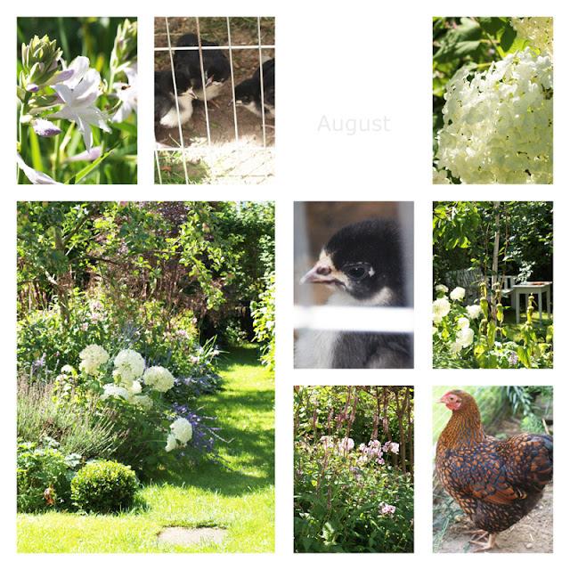 Haveåret 2016 - August