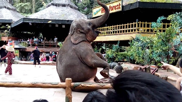 Pertunjukan Taman Safari Bogor
