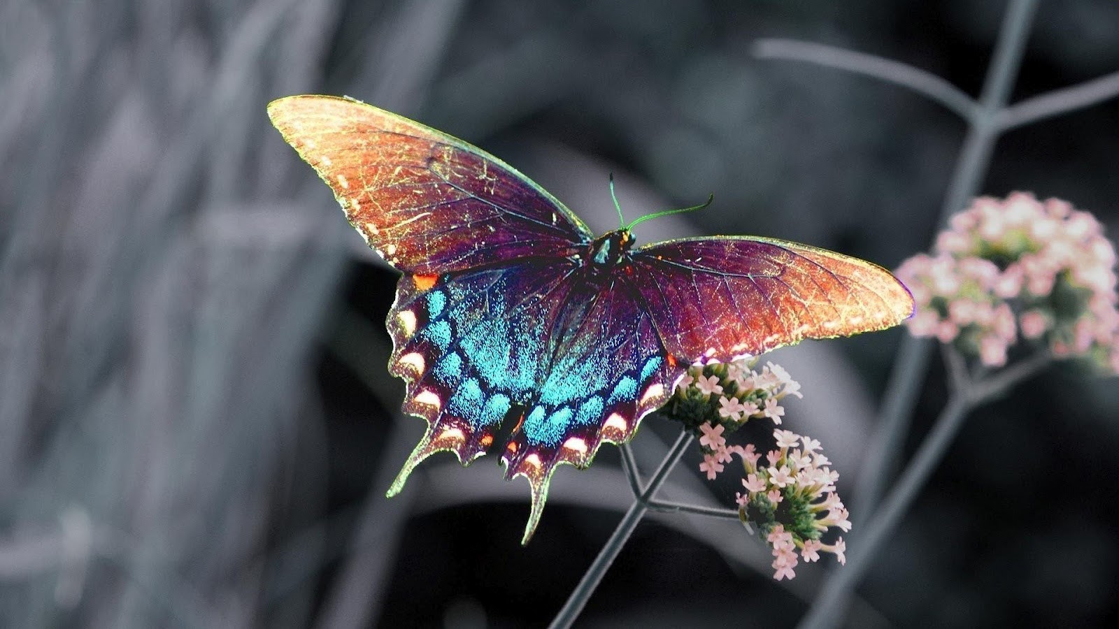 hd butterfly wallpaper with - photo #7