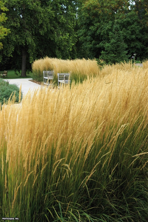 5th and state garden trends 2016 for Ornamental grasses 3 ft tall