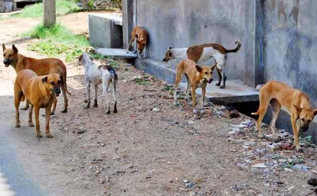 stray dogs, dogs mauled, mauled to death, Valsad, 9 year old girl