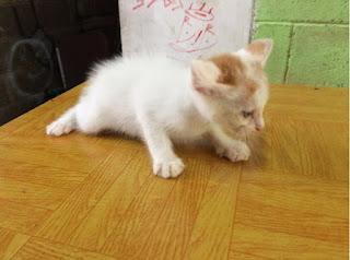 Desa Kucing Adopsi Kucing Gratis