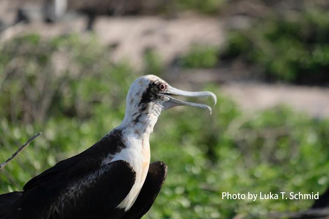Galapagos加拉巴哥,法姿優乾洗頭乾洗髮