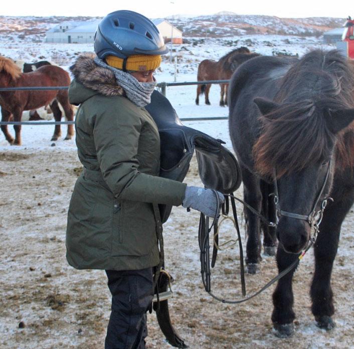 making restorations blog Icelandic ponies