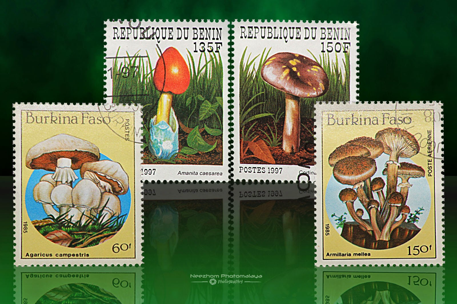 Republic of Benin and Burkina Faso mushrooms stamps