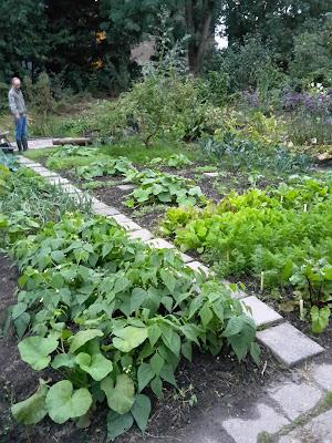 tuin in september