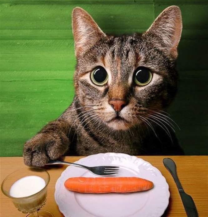 5 Makanan Kesukaan Kucing Kampung
