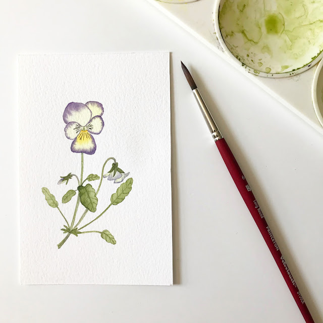 watercolor, botanical watercolor, floral watercolor, watercolor flowers, watercolor viola, violas, viola painting, Anne Butera, My Giant Strawberry