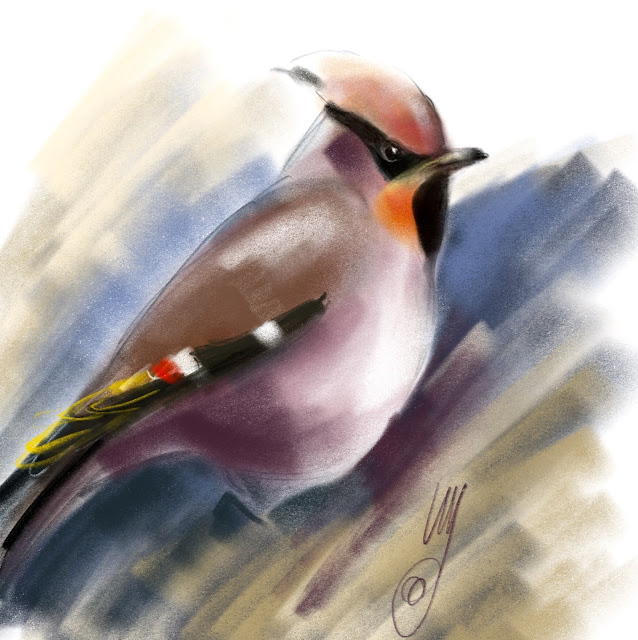 Bohemian Waxwing painted by Artmagenta
