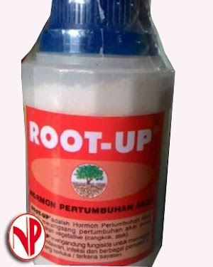 Root Up -100 Grm