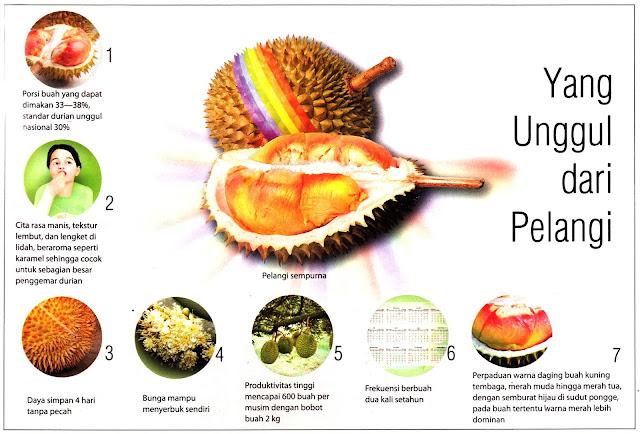 Keunggulan Durian Pelangi Papua