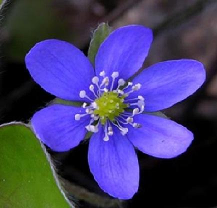 Las plantas la flor for Plantas para veredas con flores