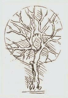 Can A Tree Grow In Your Lungs : lungs, Wonders:, Lungs,