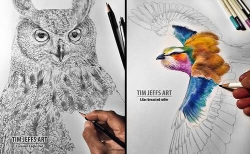 00-Animal-Drawings-Tim-Jeffs-www-designstack-co