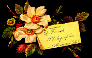 white roses with leaves cradle yellow business card for D.French, photographer, Meriden CT