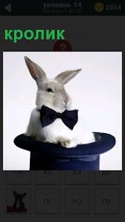 В цилиндре сидит кролик с бабочкой на шее, очень похоже на сделанный фокус