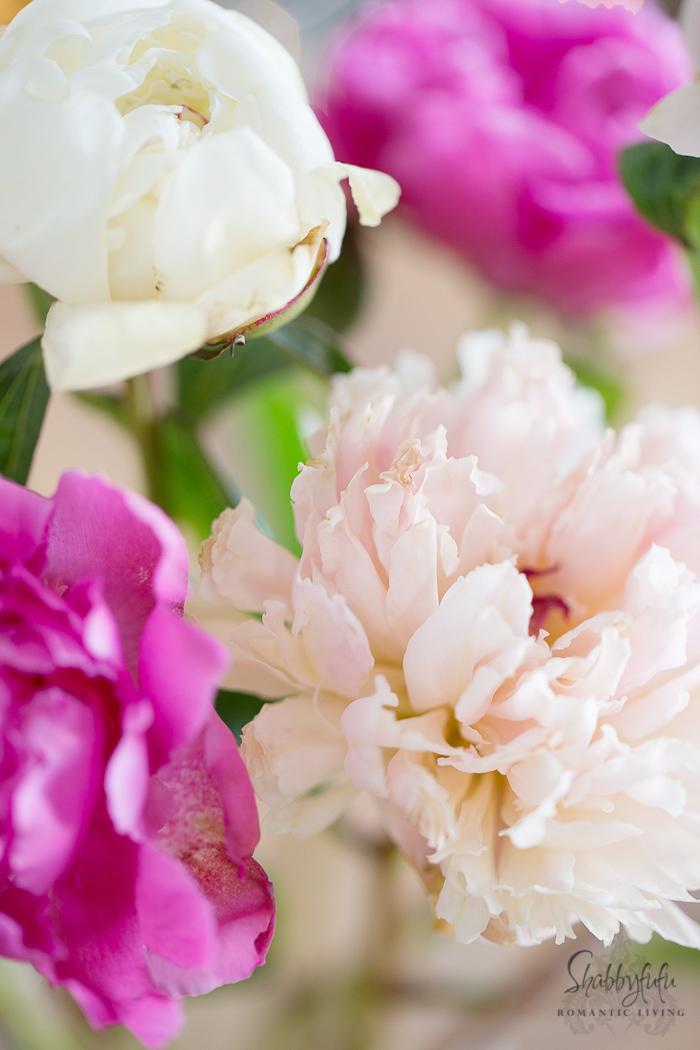 pink-peonies-shabbyfufublog