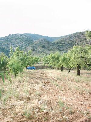 La pileta, camino, pantano de Pena, embalse, finca, almendros, olivos 27