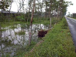 Angin Kencang Merobohkan Pohon dan Lahan Pertanian di Desa Purwodadi dan Karangtengah -  Mazzajie
