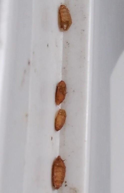 「アタマの引き出し」は生きるチカラだ!: ウジ虫は弱虫では ...