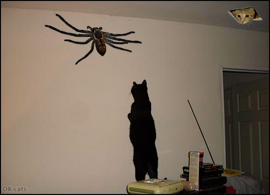 Photoshopped Cat picture • OMG, fearless Cat trying to catch giant spider. Ceiling cat is mesmerized