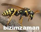 arılara çözüm