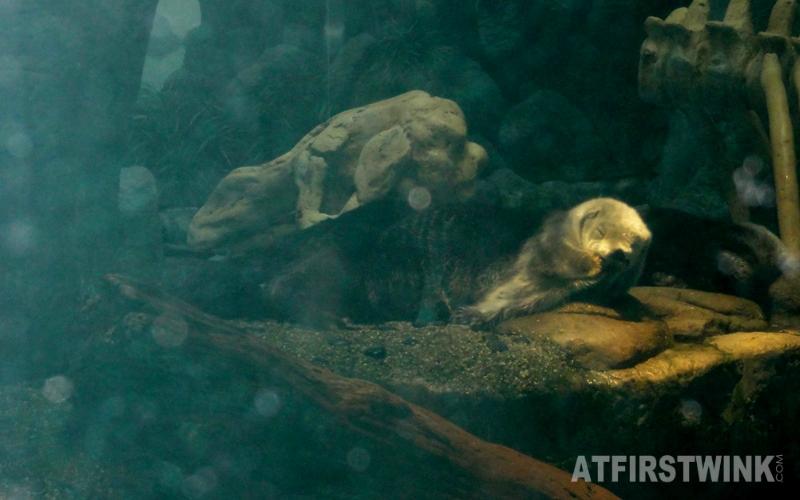 Osaka Aquarium Kaiyukan sea otter