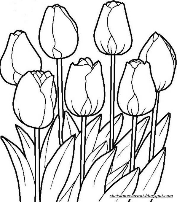 Sketsa Mewarnai Gambar Bunga Tulip Sketsa Mewarnai