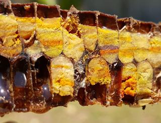 Όσα πρέπει να ξέρεις για την γύρη ως τροφή της μέλισσας