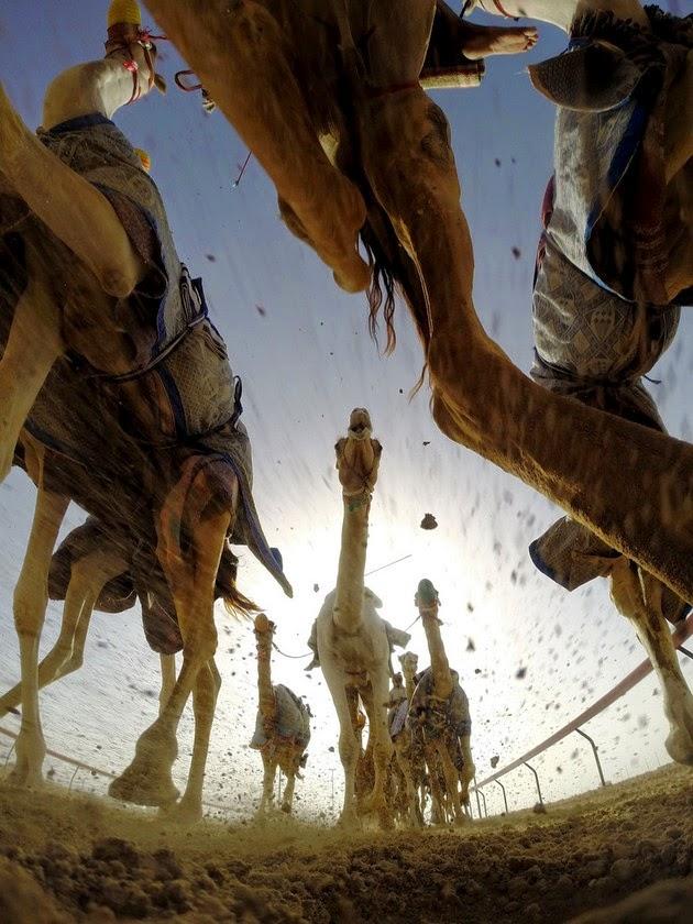 AL-Marmoum Racetrack