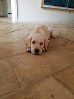 Puppy on floor, looking up with sad eyes, symbolizing the brain's bad habits before being retrained with neuroplasticity