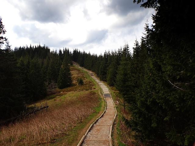 Końcowe podejście pod szczyt Gęsiej Szyi (1489 m n.p.m.)