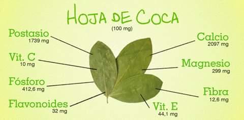 Propiedad de la hoja de Coca