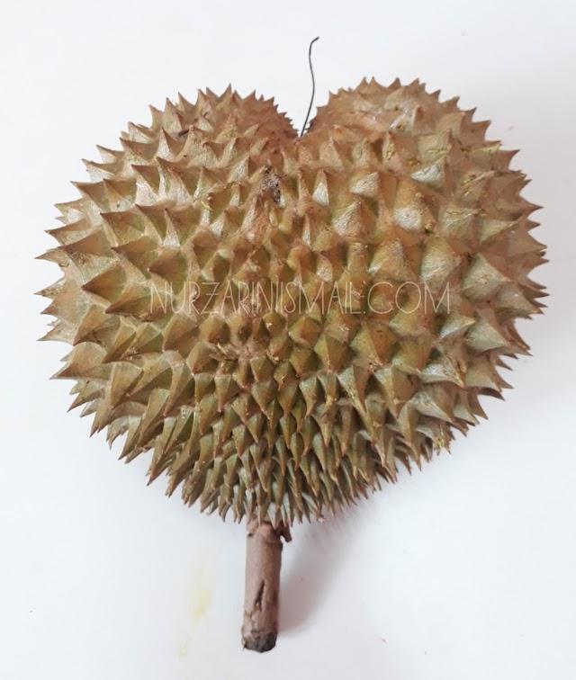 Tips Pilih Buah Durian yang Elok dan Matang