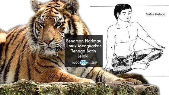 Tutorial Senaman Harimau Untuk Menguatkan Tenaga Batin Lelaki