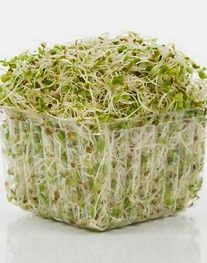 Alfalfa sirve para bajar de peso