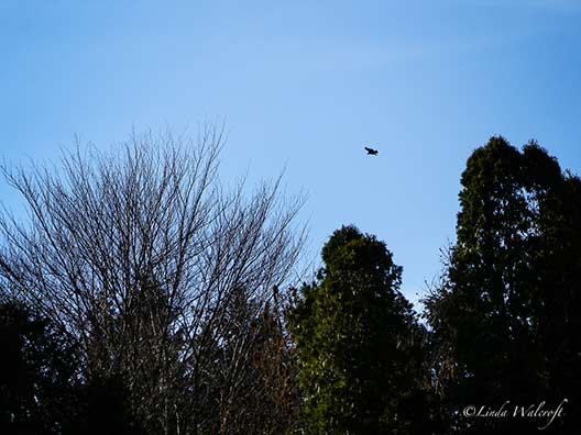 bird flying over trees