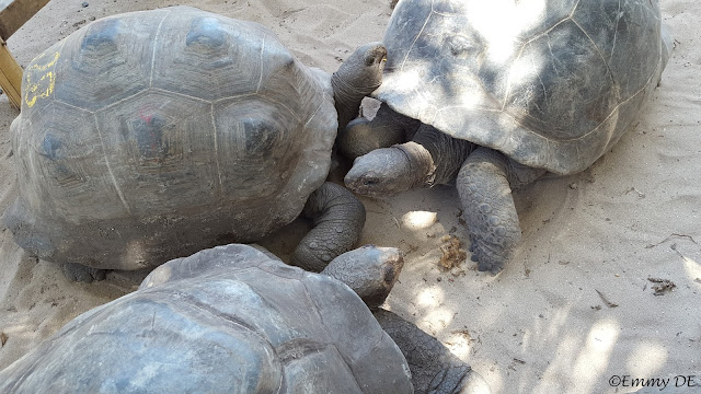 #turtles Curieuse Island ~ Seychelles by ©Emmy DE
