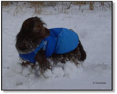 Schneebommeln am Hund