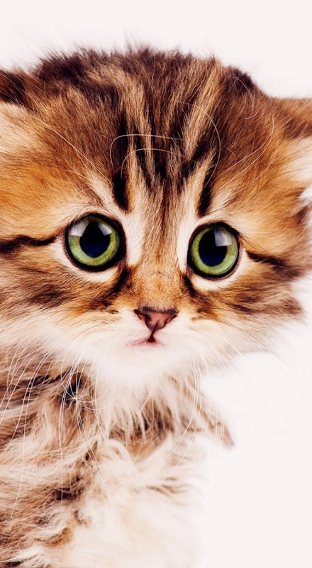 Cat Wallpaper Tumblr Iphone | Wallpapers Snipe