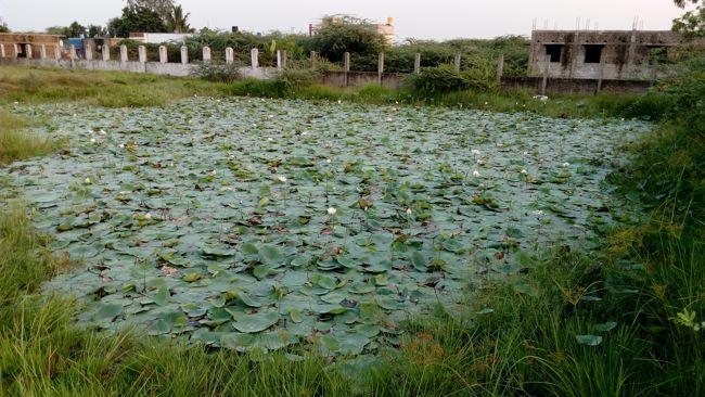 Sri Singeeswarar Temple Tank