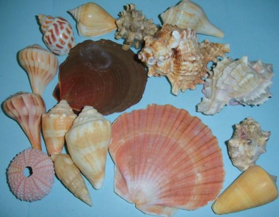 Learning Ideas Grades K 8 Invertebrates Mollusk