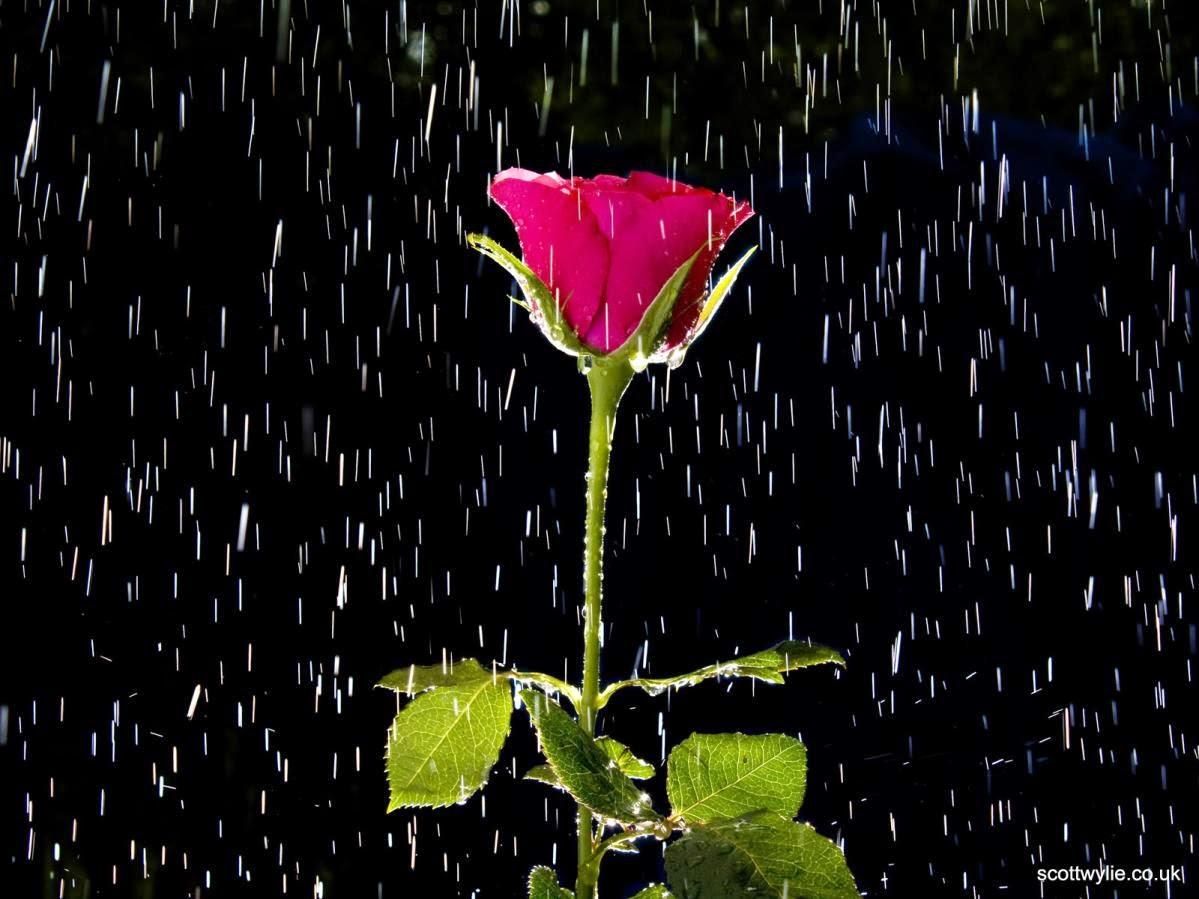 animated rain wallpapers 1366x768 - photo #43