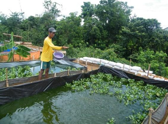 9 Jenis Pakan Ikan Lele Agar Cepat Besar Ampuh Superperikanan