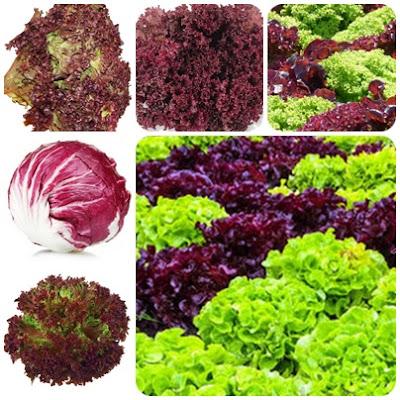 Jak przygotować rozsadę sałaty na wcześniejszy zbiór latem