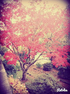 alberi magici